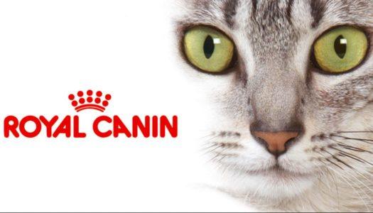 Royal Canin цены на заказ по предоплате