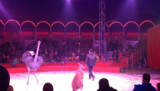 В казанском цирке страус напал на зрителей